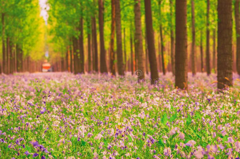 Dreamlike forest in spring. Dreamlike forest with flowers overspread the land in spring stock photos