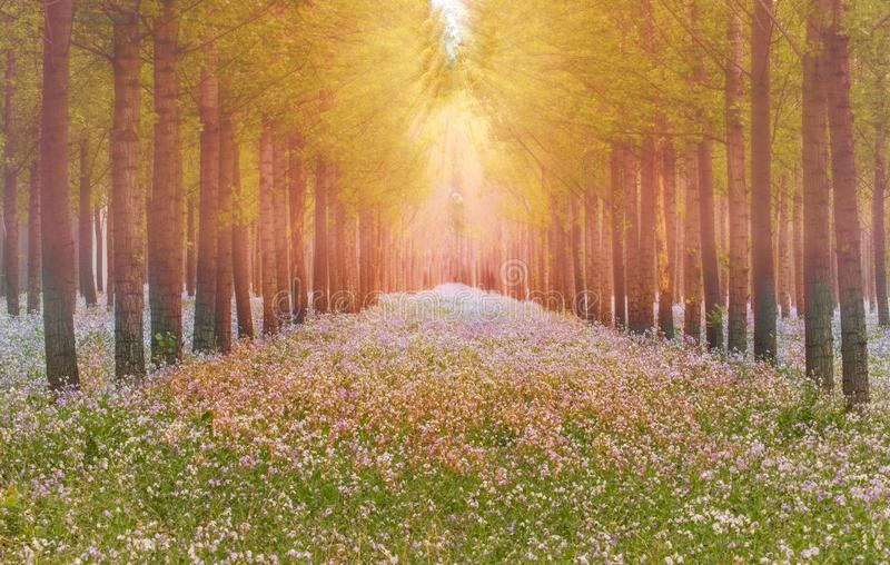 Dreamlike forest in spring. Dreamlike forest with flowers overspread the land in spring royalty free stock photo