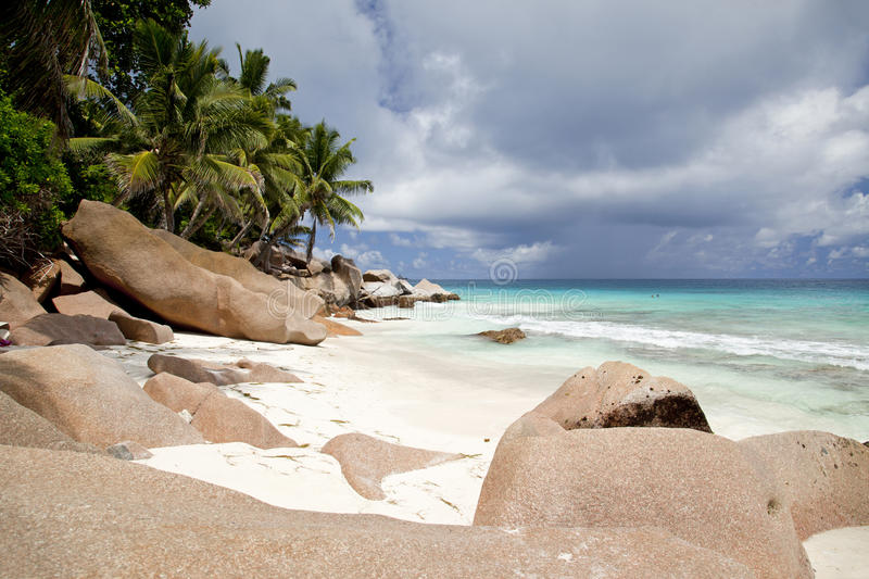 Download Dreamlike Lonely Beach With Palm Trees Stock Photo - Image: 22251152