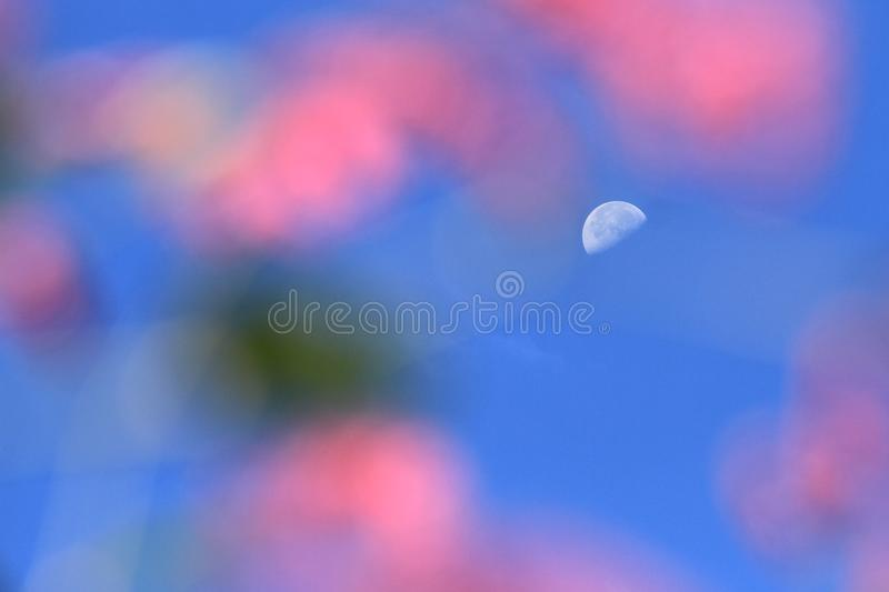 Dreamlike moon in blue sky. In sunny day with pink foreground royalty free stock photo
