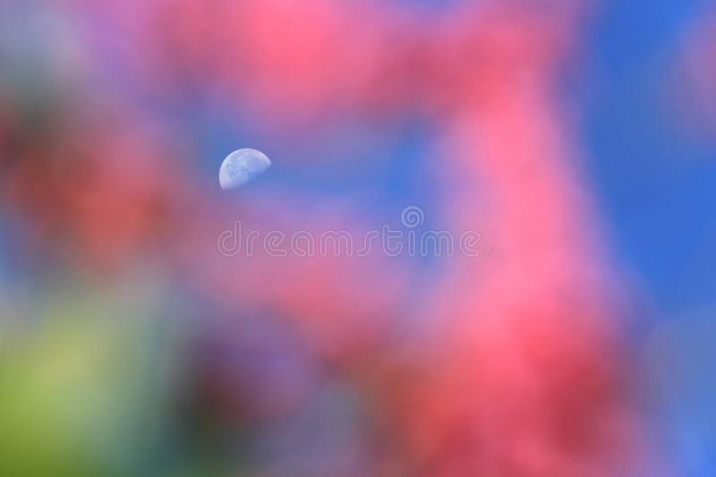 Dreamlike moon in blue sky. In sunny day with pink foreground royalty free stock photography