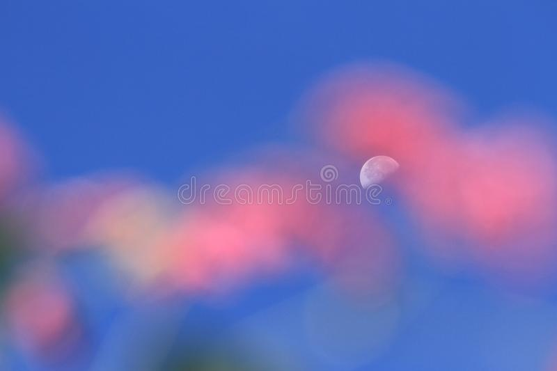 Dreamlike moon in blue sky. In sunny day with pink foreground stock images