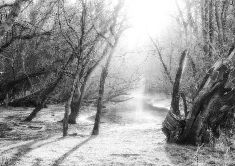 Dreamlike scenery in the forest with a pond. In black and white royalty free stock photos