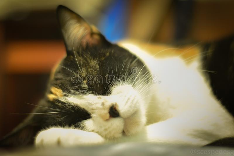 Dreams of cats stock photos