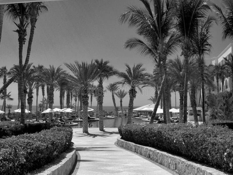Dreams Los Cabos Suites Golf Resort and Spa in Mexico. Dreams Los Cabos Suites Golf Resort and Spa in Los Cabos, Mexico. Destination wedding at the beach stock image
