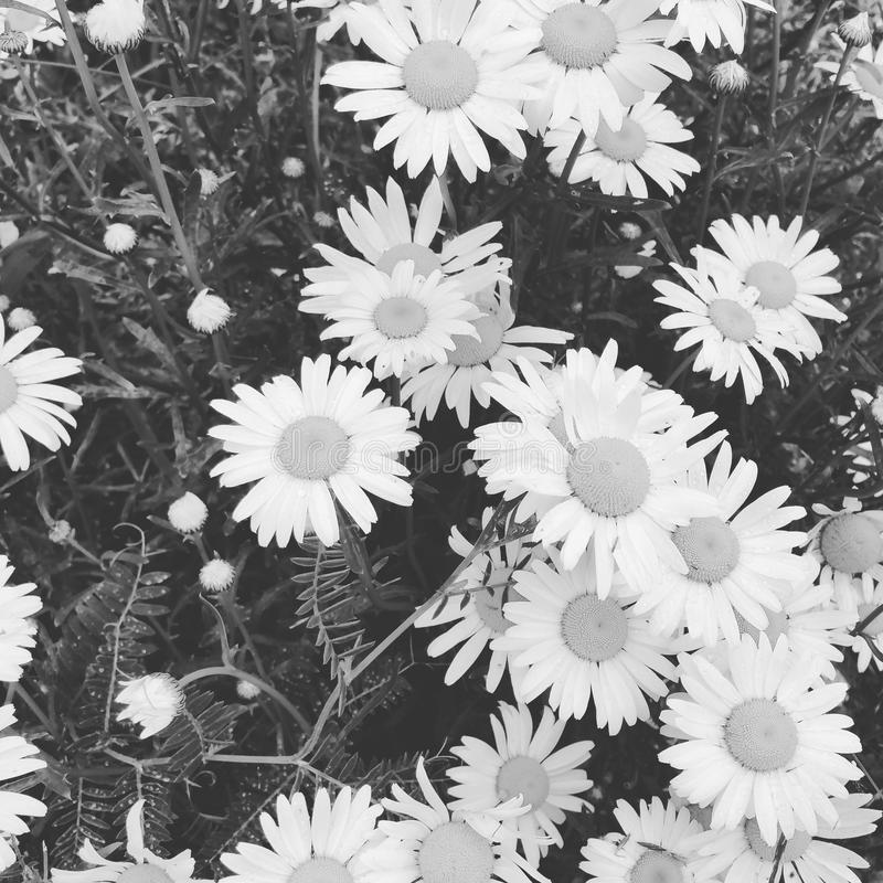 Dreamscapes op bloemen stock foto's