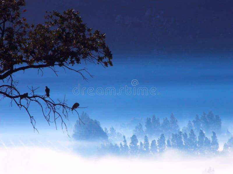 Dreamstime fotografia stock