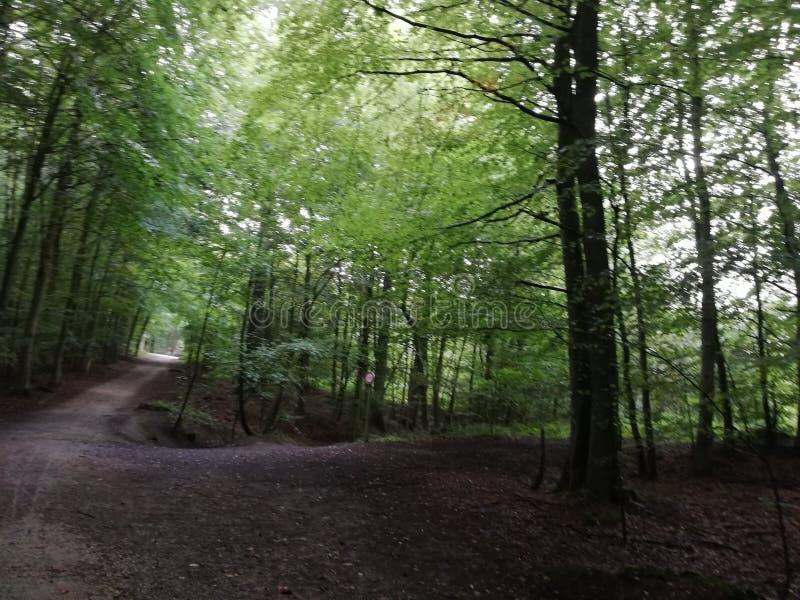 Enchanted florest. Dreamstime Enchanted florest road path stock image