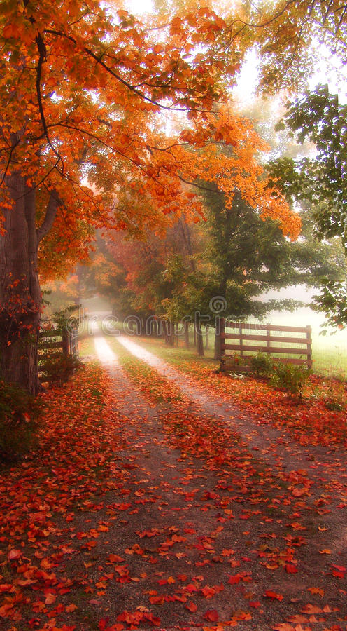 Download Dreamy Autumn Road Stock Photos - Image: 25598073