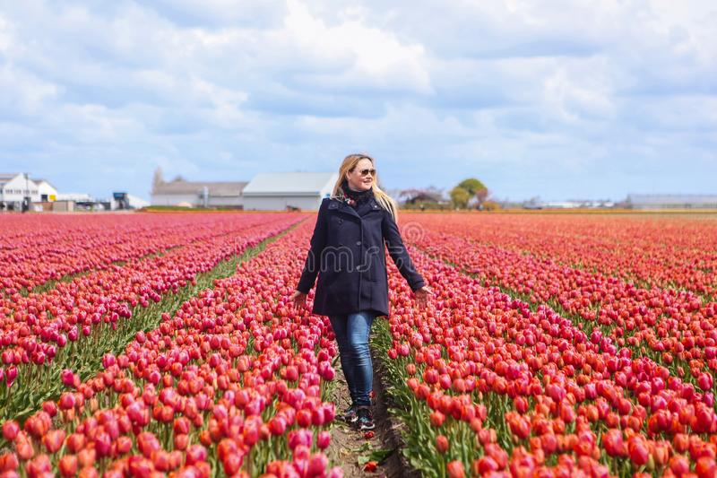 Dreamy beautiful long haired blond woman wearing blue coat standing in a field of pink tulips royalty free stock images