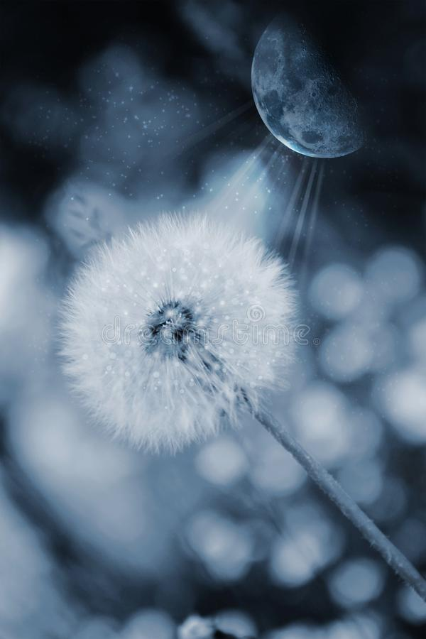 Download Dreamy dandelion with moon stock illustration. Illustration of blue - 118241330