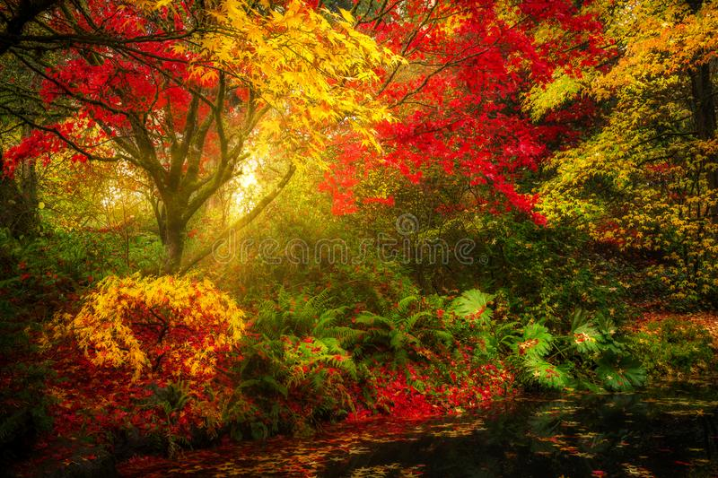Dreamy fall foliage landscape in Seattle stock photo