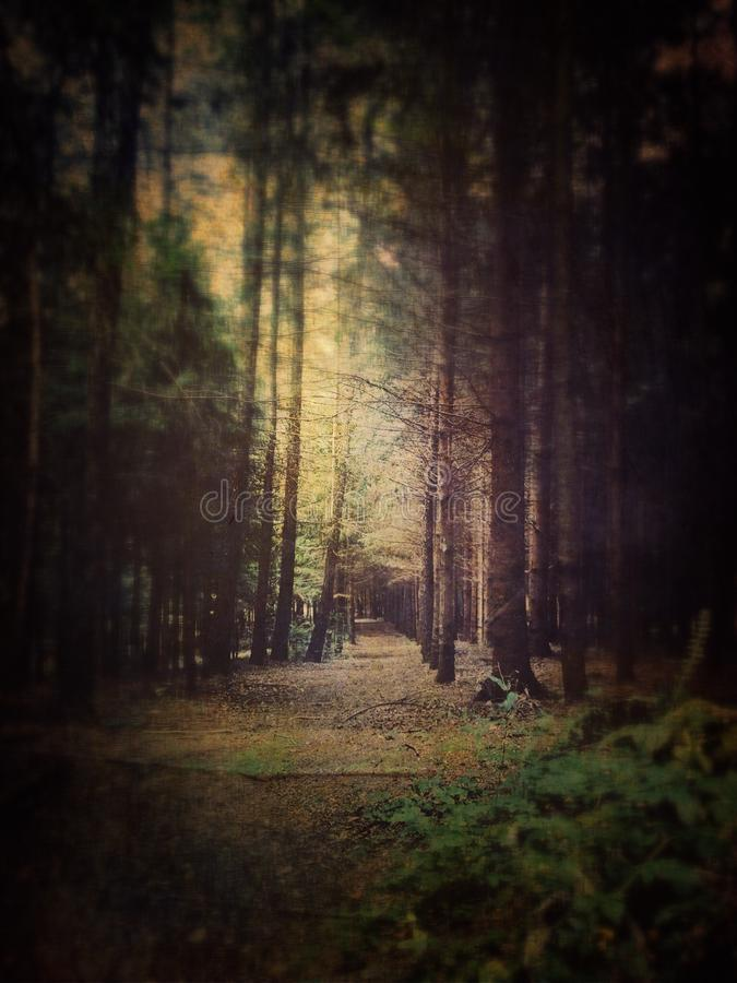 Dreamy forest stock image
