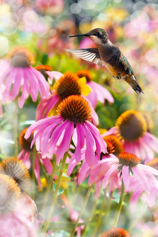 Dreamy Image Of A Hummingbird Feeding Royalty Free Stock Image
