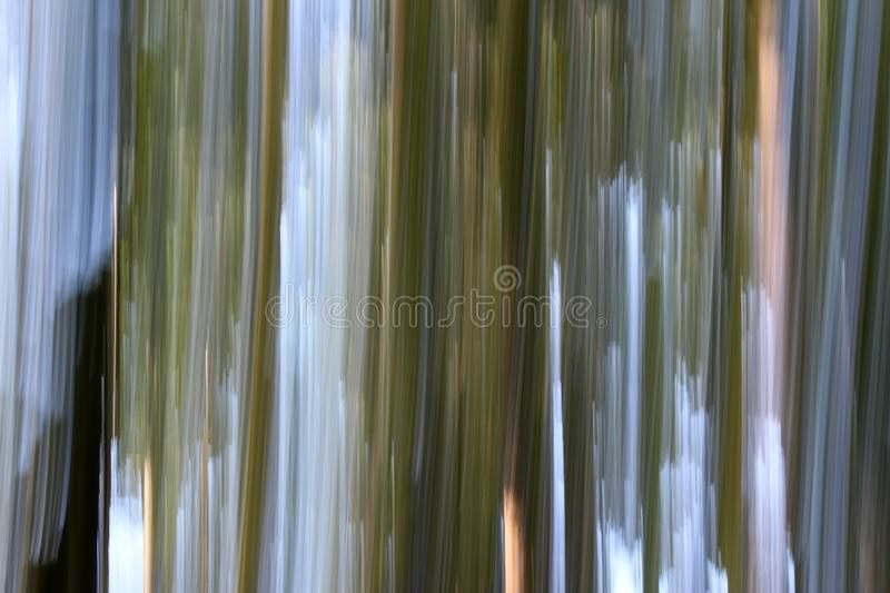 Dreamy image of tree trunks, grass, blue and white sky done with technique known as panning to photographers. Nature`s dreamy side, with brown and green moss royalty free stock images