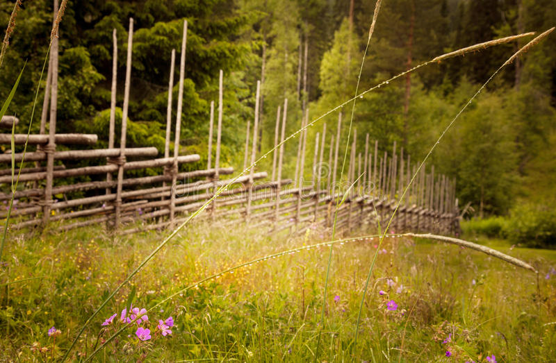 Dreamy landscape in Sweden. Texture conceptual image. royalty free stock photo
