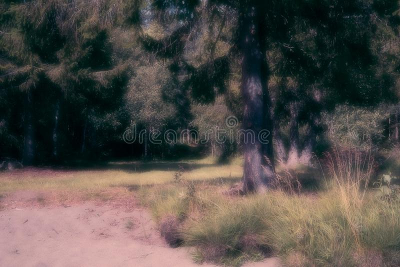 A dreamy, peaceful beachfront summer scenery of sand, grass,straw, fir tree and a forest in the background. With copyspace stock photography