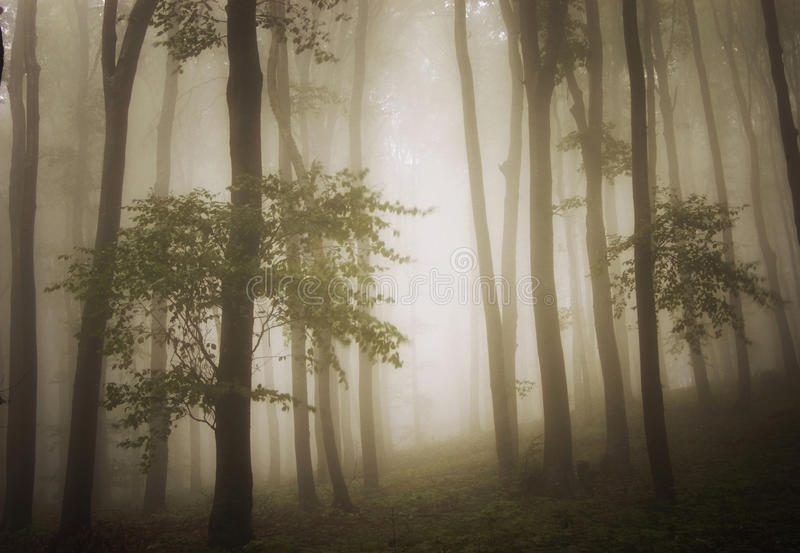 Download Dreamy Photo Of A Beautiful Green Forest With Fog Stock Image - Image of environment, cold: 19323093