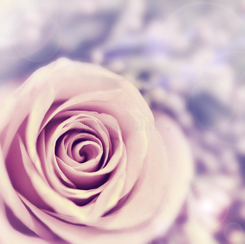 Download Dreamy Rose Abstract Background Stock Photography - Image: 23500892