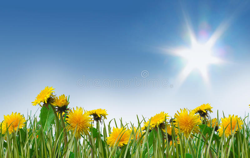 Download Dreamy Spring Meadow Full Of Dandelions Stock Photo - Image: 11969252