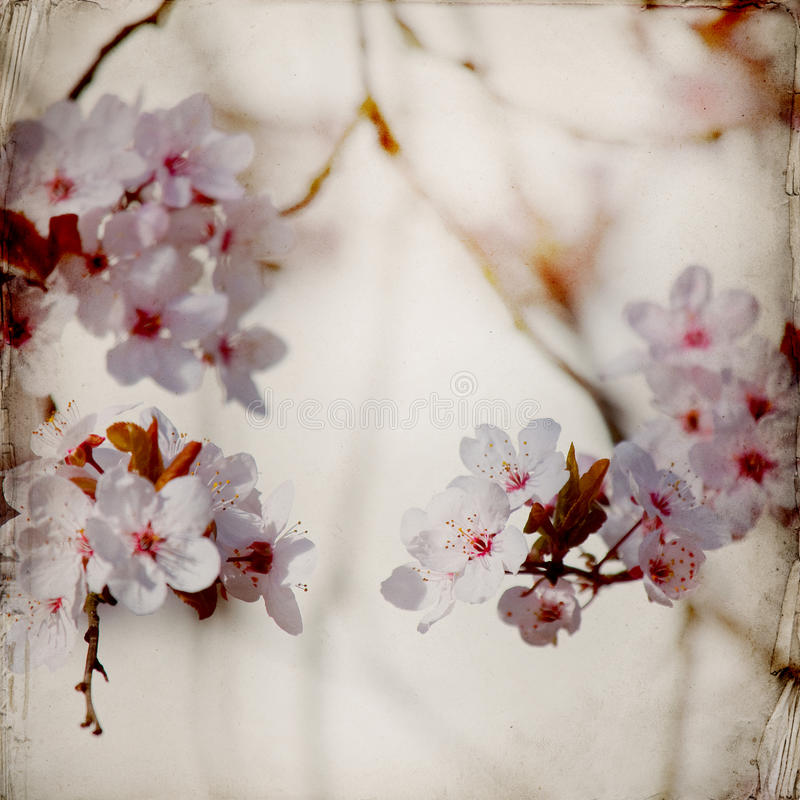 Dreamy springflowers background stock photos