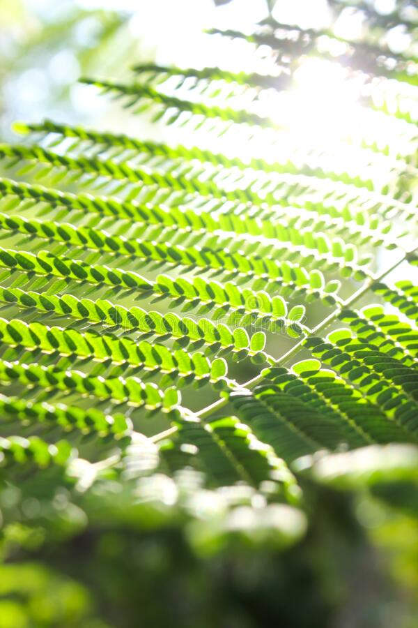 Dreamy sunlit background of green spring leaves. stock photos