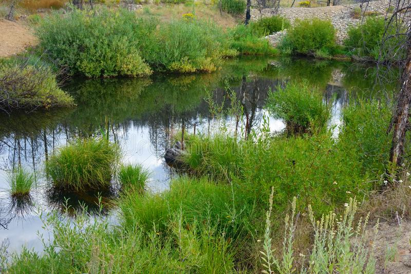 Dredge Pond - Idaho. Reflections of a burned forest in a mining dredge pond, Idaho royalty free stock photography