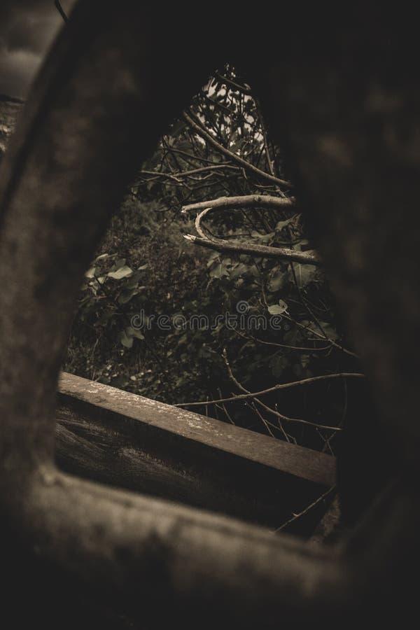 Drehen Sie herein den Wald stockfotos