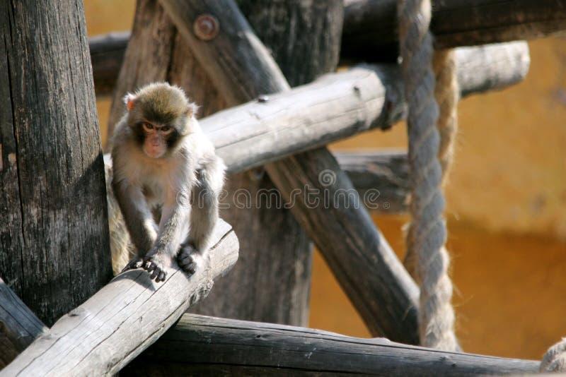 Drei Affen im Zoo stockfoto