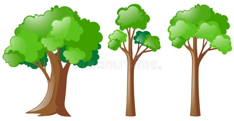 Drei Arten Baum lizenzfreie abbildung