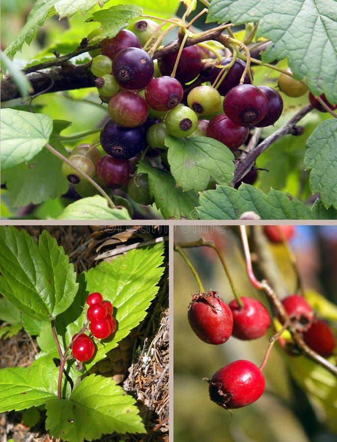 Drei Arten Beeren lizenzfreie stockfotos
