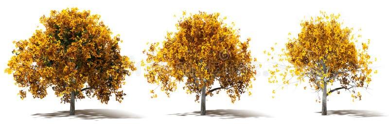 Drei Autumn Marple Trees Renderings stock abbildung