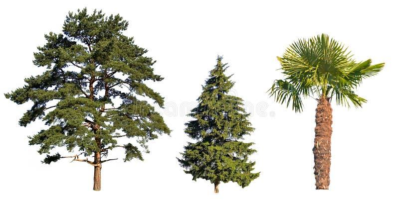 Drei Bäume getrennt auf Weiß lizenzfreies stockfoto