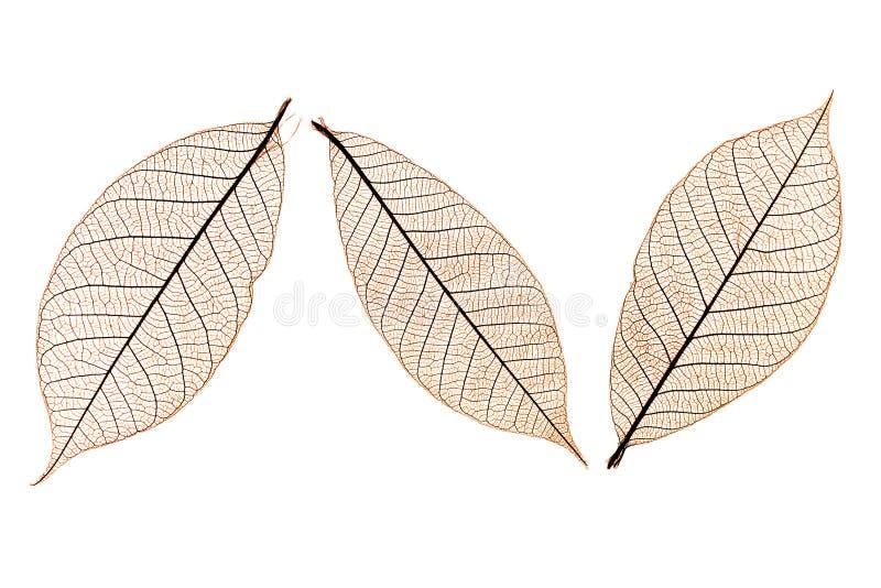 Drei Blätter stockfoto