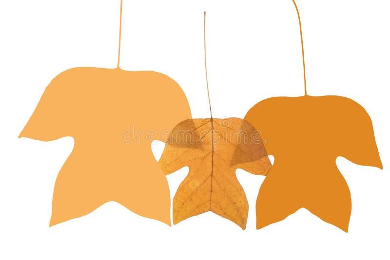 Drei Blätter stockbilder