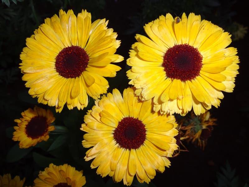Drei-Blume lizenzfreie stockbilder