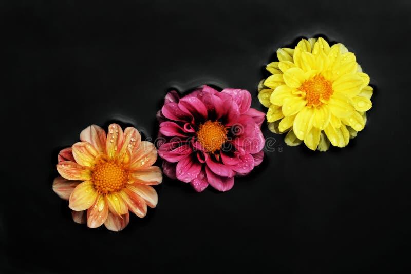 Drei Blumen im Wasser stockfoto