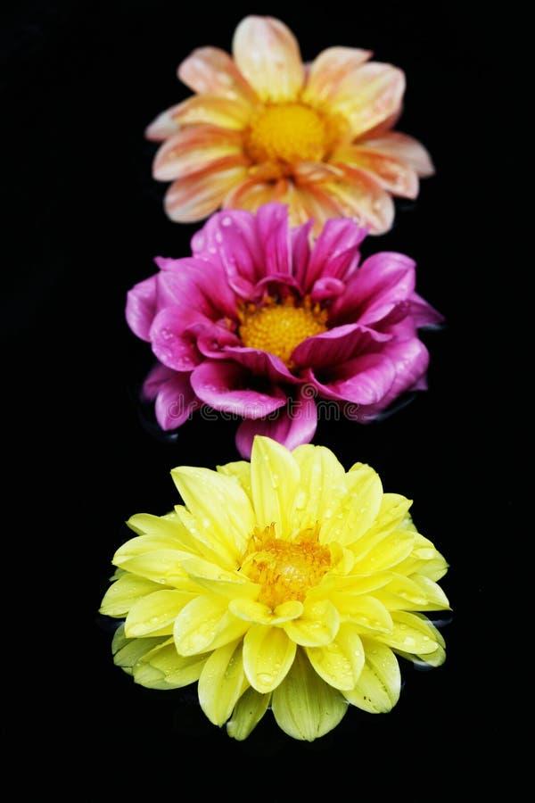 Drei Blumen im Wasser lizenzfreie stockfotografie