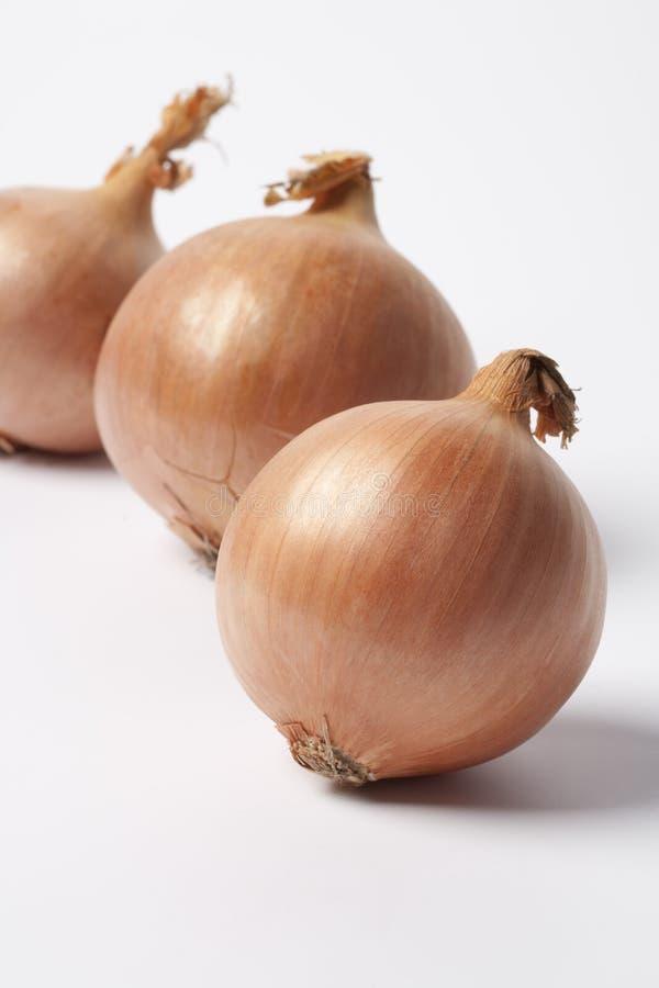 Drei braune Zwiebeln auf weißem Hintergrund stockbild
