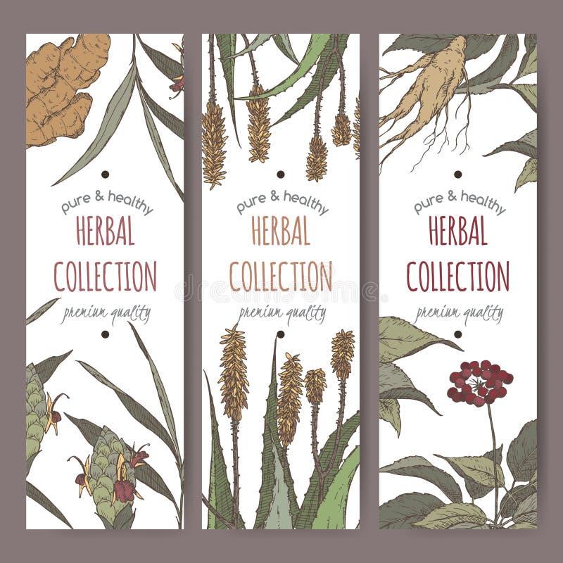 Drei Farbvektor-Kräuterteeaufkleber mit Ingwer, Aloe und Ginseng vektor abbildung