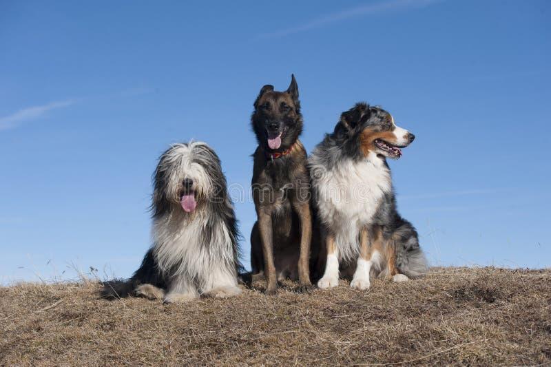 Drei Freunde lizenzfreies stockbild