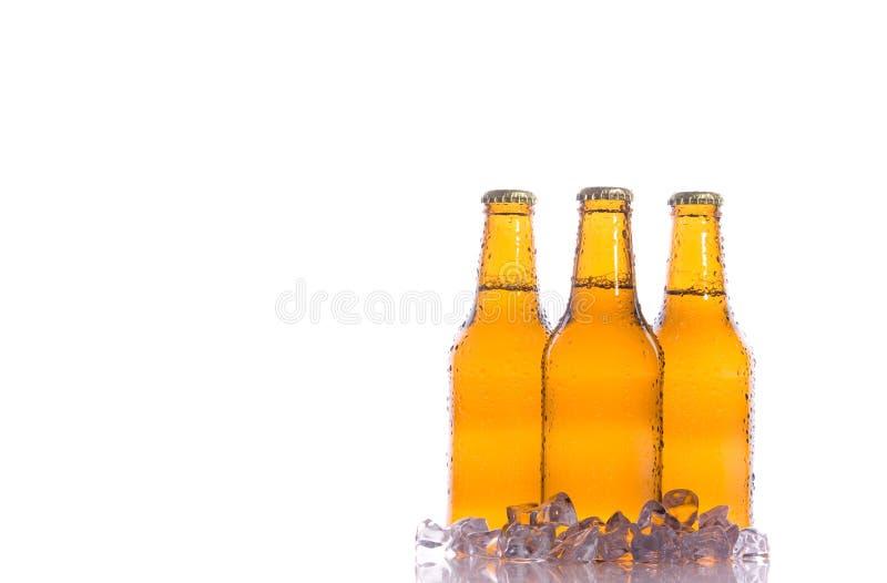 Drei frische Biere mit Eis lizenzfreies stockbild