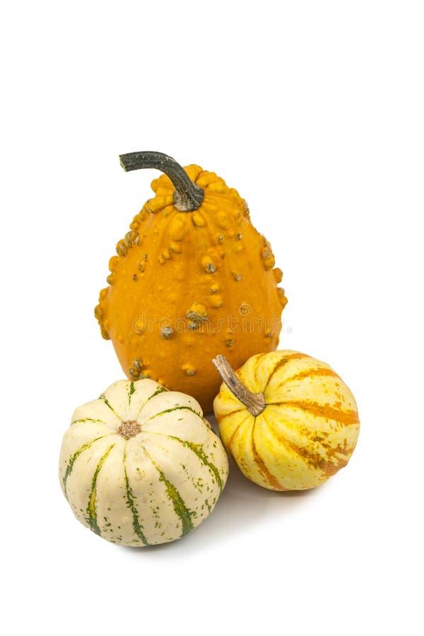 Drei frische dekorative Herbst Cucurbitakürbisse lizenzfreies stockbild
