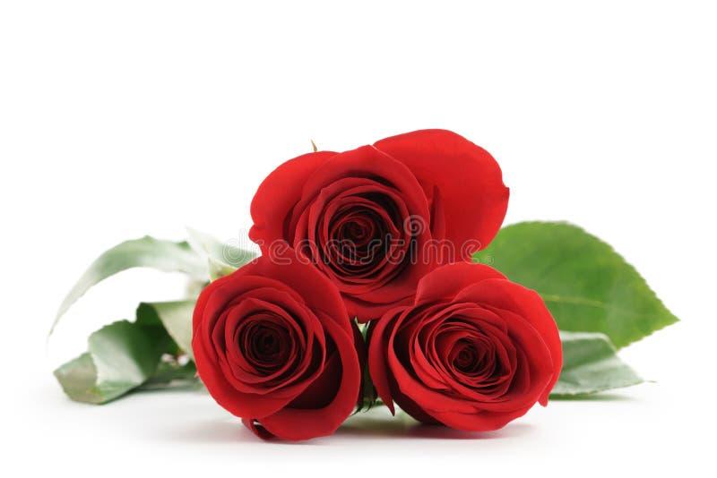 Drei frische rote Rosen lokalisiert auf Weiß lizenzfreie stockfotografie