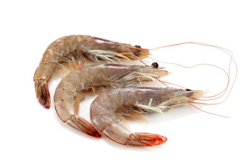 Download Drei Garnelen grob stockfoto. Bild von ungekocht, seafood - 26354708