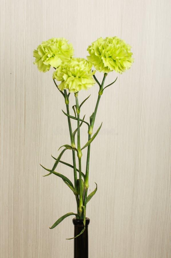 Drei Gartennelkenblumen im Vase lizenzfreie stockbilder