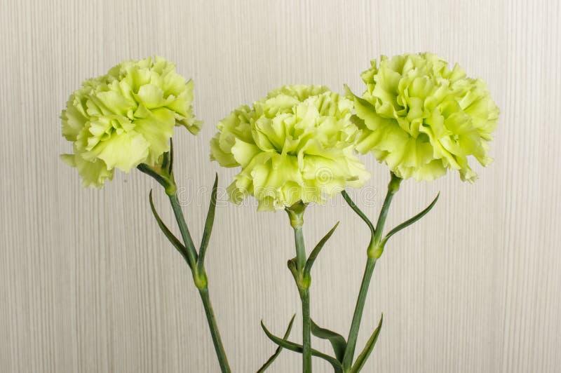 Drei Gartennelkenblumenblüte schließt oben stockfotos