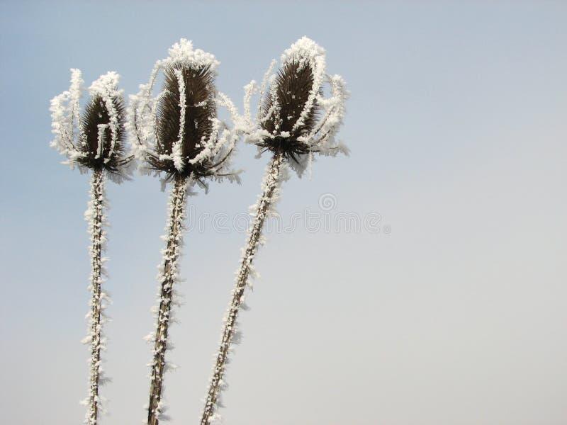 Drei gefrorene Köpfe lizenzfreie stockbilder