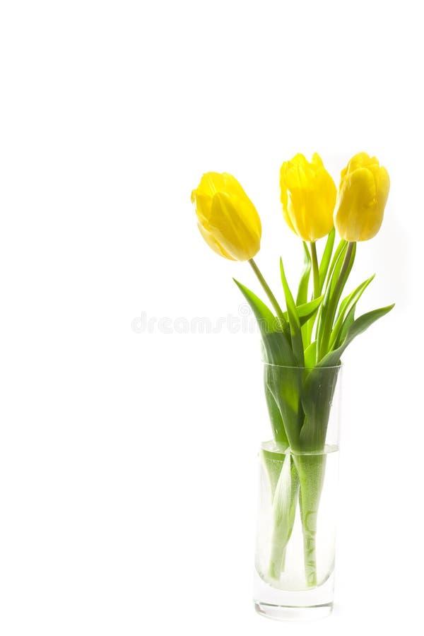 Drei gelbe Tulpen im Vase lizenzfreie stockfotos
