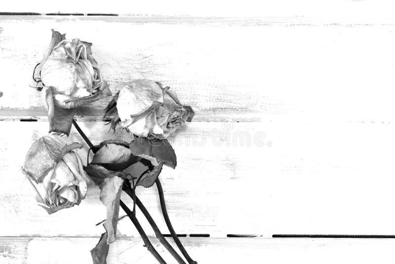 Drei getrocknete Rosen lizenzfreie stockfotos